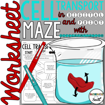 Cellular Transport Maze Worksheet for Review or Assessment