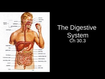 Ch. 30.3 Digestive System Slideshow