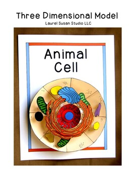 Biology Animal Cell Model 3 Dimensional Project Organelles