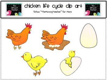 Clip Art: Chicken Life Cycle ClipArt