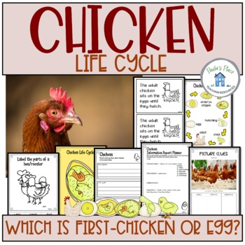 Chicken Life Cycle (K-2)