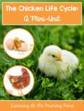 Chicken Life Cycle Unit for Preschool, Kindergarten, or Fi