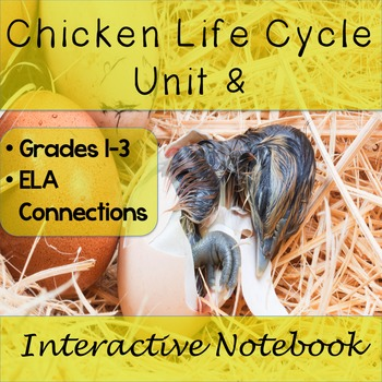 Chicken Life Cycle Unit and Interactive Notebook Grades 1 - 3