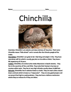 Chinchilla - rodent review article lesson information fact
