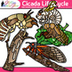 Cicada Life Cycle Clip Art {Great for Animal Groups, Insec