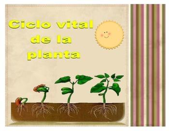Ciclo vital de la planta