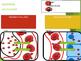 Circulatory System Animation