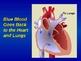 Circulatory System Presentation