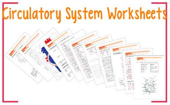 Circulatory System Worksheet 6