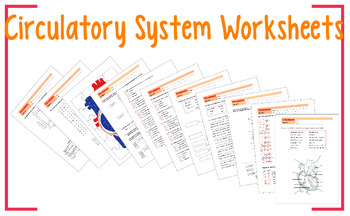 Circulatory System Worksheet 8