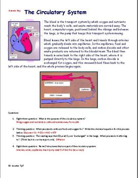 Circulatory/Digestive System easy reading with questions