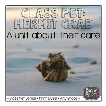 Hermit Crabs Articles, Activities, and Care Plans