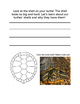 Class Pet Journal on the Red-Eared Slider Turtle