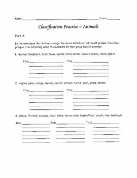 Classification Practice - Animals