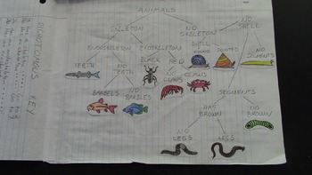 Classification and Dichotomous Keys - Interactive Notebook