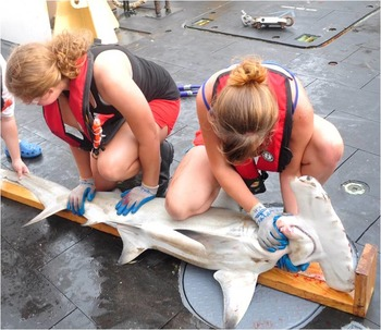 A Research Trip to Study Sharks