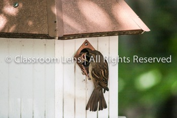 Classroom Lens Stock Photo - Bird Feeding Baby Birds