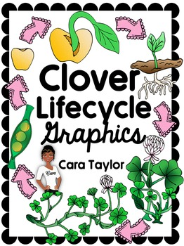 Clip Art~ Clover / Shamrock Lifecycle for St. Patrick's Day