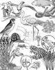 Clip Art Food Web - SALT MARSH Wetlands - Ecology Biology