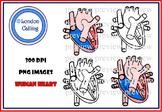Clip  Art - HUMAN HEART- Growing Bundle!!!