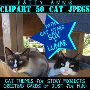 Clip Art Photo CATS - 50 Photographs > Themes for Projects