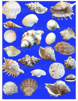 Clipart - Sea Shells, Sea Stars, and Other Nautical Items