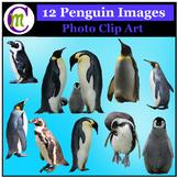Clipart ♦ Penguins Photo Clipart (Clip Art)