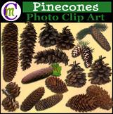 Clipart ♦ Pinecones Photo Clipart (Clip Art)