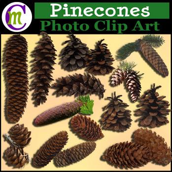 Clipart ♦ Pinecones Photo Clip Art
