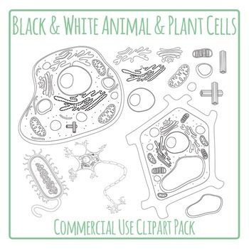 Cells - Plant and Animal Cells Diagrams in Black and White