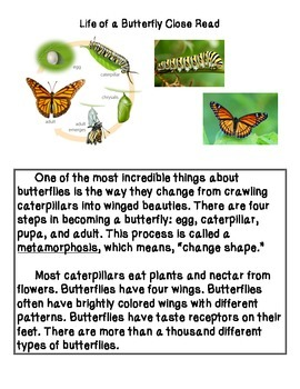 Close Reading ~ Butterfly: Expository Text
