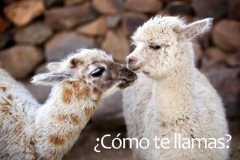 ¿Cómo te llamas? Alpaca/Llama Poster: Digital Download