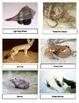Gulf Coastal Animal Unit