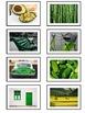 Color Sorting TEACCH Task Box Cards -Purple Green Orange
