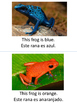 Colorful Frogs adapted book in English and Spanish!