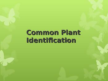 Common Plant Identification