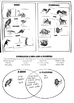 Comparing Birds and Mammals: A cut and sort activity for M