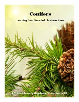 Conifers - A student investigation using discarded Christm