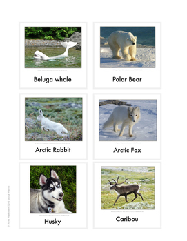 Continent Animal Cards, Arctic (colored border)