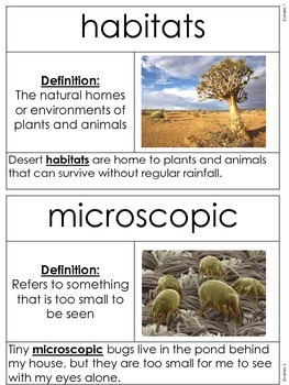 Core Knowledge Vocab Cards: Insects {2nd grade}