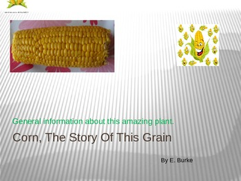 Corn, The Story Of This Grain