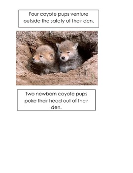 Coyote images 2