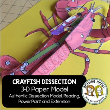 Crayfish Dissection - 3-D Paper Model