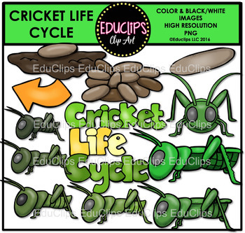 Cricket Life Cycle Clip Art Bundle {Educlips Clipart}
