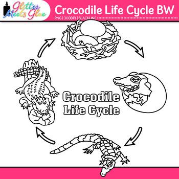 Crocodile Life Cycle Clip Art {Teach Animal Groups, Habita