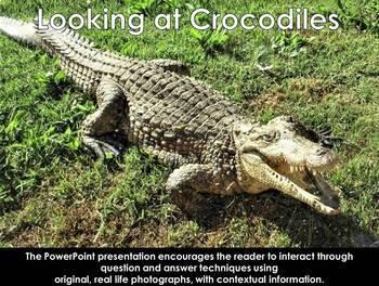 African Reptiles: Crocodile - PDF presentation