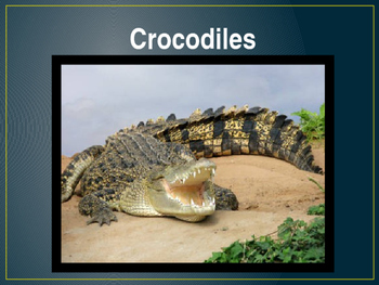 Crocodiles Powerpoint
