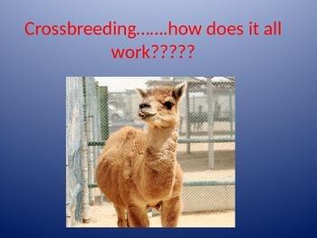 Crossbreeding
