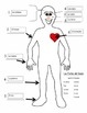 """Cuerpo"" Spanish Body Parts Graphic Organizer & Definite A"