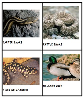 DESERT FOREST WETLAND Animal Cards